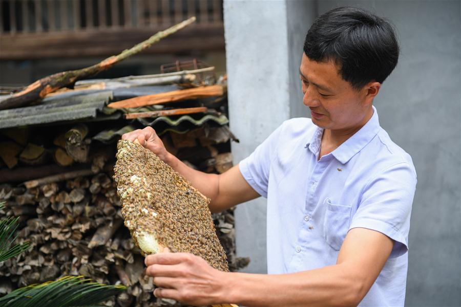 (决战决胜脱贫攻坚·图文互动)(1)深谷养蜂人