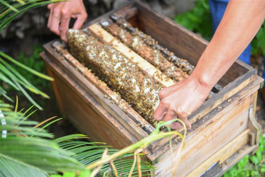(决战决胜脱贫攻坚·图文互动)(3)深谷养蜂人
